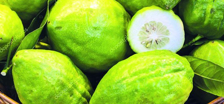 """Il Cedro esclusiva calabrese… considerato """"frutto sacro"""" dagli ebrei di tutto il mondo"""