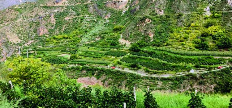 Un vino vallesano ai piedi dell'Himalaya