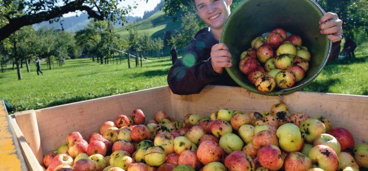 La vita in campagna – esperienze in fattoria