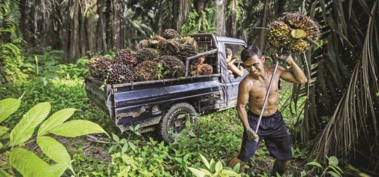 Un referendum sull'olio di palma: tema scottante