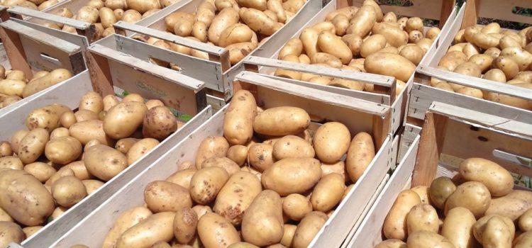 Con le restrizioni gli svizzeri fanno incetta di patate